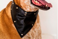 Magnetic Pet Bandana - Faux Leather 'Moc Croc'
