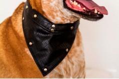 Magnetic Pet Bandana - Faux Leather 'Moc Croc'