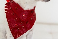 Magnetic Pet Bandana - Faux Leather 'Moc Croc' Red with Fringe