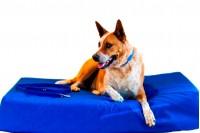 Magnetic Pet Bed 20cm Canvas Waterproof