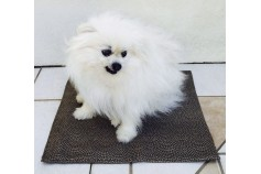 Magnetic Pet Blanket with Cotton Cover