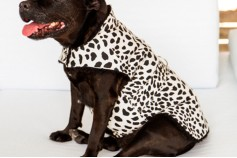 Magnetic Pet Coat - Cotton
