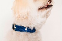 Magnetic Pet Collar - Cotton Neon