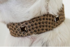 Magnetic Pet Collar - Cotton Peacock