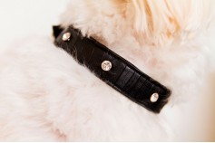 Magnetic Pet Collar Faux Leather - Moc Croc