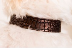 Magnetic Pet Collar Faux Leather - Yoshi