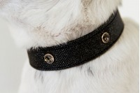 Magnetic Pet Collar - Glitterati