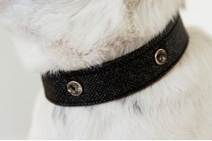 Magnetic Pet Collar - Glitterati