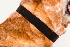 Magnetic Pet Collar - Canvas Waterproof